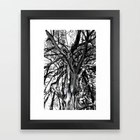 Broken Boughs Framed Art Print