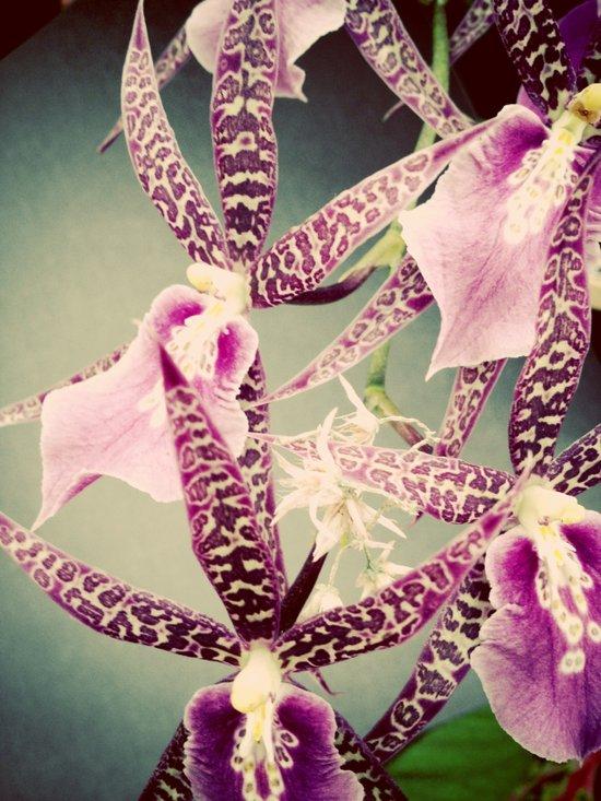 Orchid Love 2 Art Print