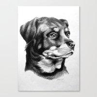 Rottweiler Devotion Canvas Print