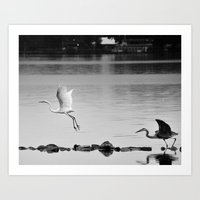 Stay, My Fair Egret ! Art Print
