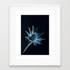 Blue Thistle Framed Art Print