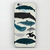 Whales and Porpoises sea life ocean animal nature animals marine biologist Andrea Lauren iPhone & iPod Skin