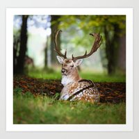 Bambi  :)  Art Print