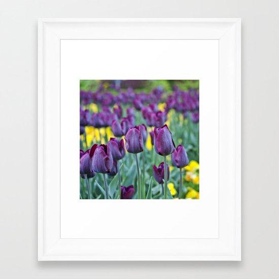 morados Framed Art Print