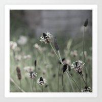 Grave Flowers Art Print