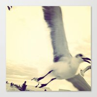 Gull, closeup  Canvas Print