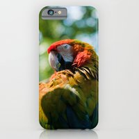 iPhone & iPod Case featuring Macaw by Steve Hamilton