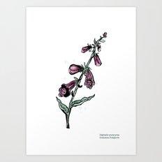 Digitalis purpurea Art Print