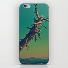 masonry  iPhone & iPod Skin