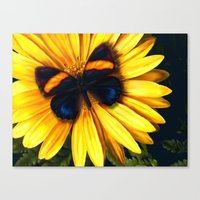 Butterfly On Yellow Canvas Print