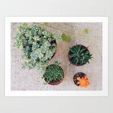 Drought Friendly Plants Art Print