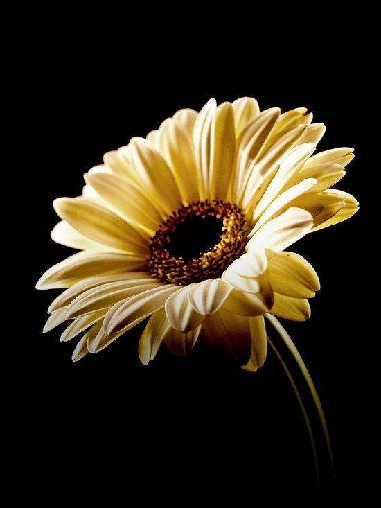 Floral Highlights Art Print
