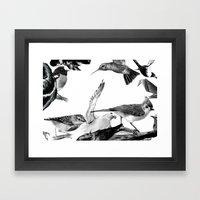 A Volery Of Birds Framed Art Print