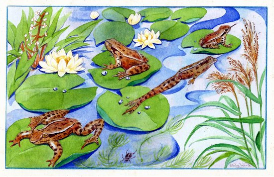 Four Frolicking Frogs Canvas Print