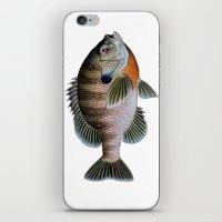 bluegill1 iPhone & iPod Skin