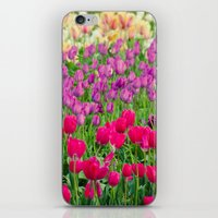 Fields of Color I, Woodburn Tulip Festival iPhone & iPod Skin