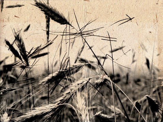DRESSED GRAIN Art Print