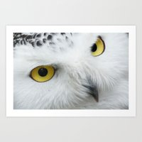 Snowy Owl Eyes Art Print