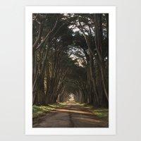 Cypress Tree Tunnel Art Print