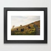 Cattle Grazing On Mounta… Framed Art Print
