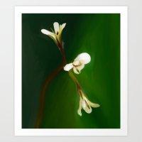 wild geranium - Free shipping Art Print
