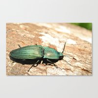 Bug on a Log Canvas Print