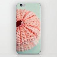 sea urchins series no 1 iPhone & iPod Skin