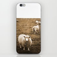 Sheep in a field iPhone & iPod Skin