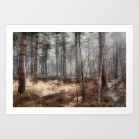 Pale Woods Art Print