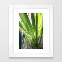 tulip stems Framed Art Print