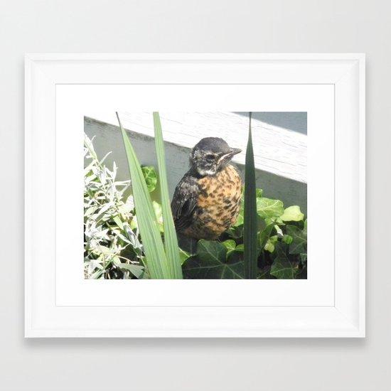 Baby Robin Framed Art Print