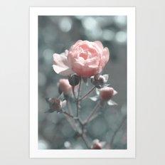 Romantic rose at Backlight Art Print
