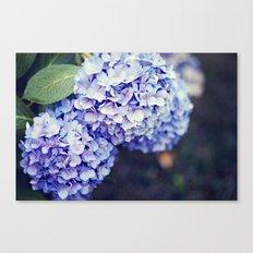 Purple Hydrangeas Canvas Print