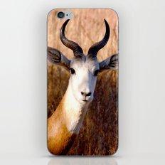 you lookin' at me?  iPhone & iPod Skin