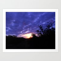 The Morning Glory  Art Print