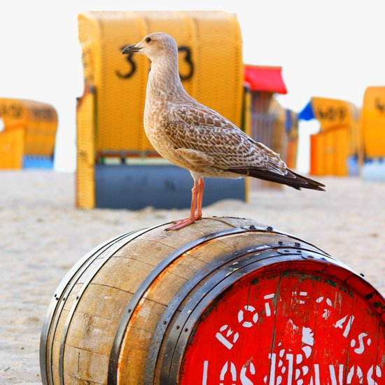 Seagull on the beach on a wooden barrel Canvas Print