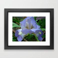 Hybrid Iris II Framed Art Print