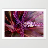 Pinks And Purples Art Print