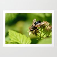 Just A Fly. Art Print