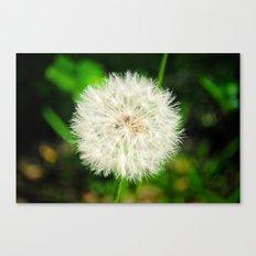 Dandelion. Canvas Print
