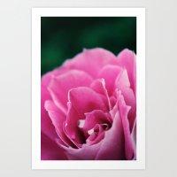 Flower In Bloom Art Print