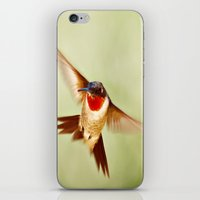 The Hummingbird iPhone & iPod Skin