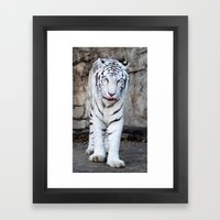 Into The Eyes Of A Tiger Framed Art Print