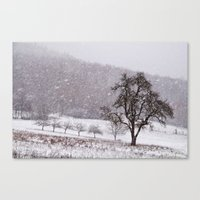 Old Pear Tree On A Winte… Canvas Print