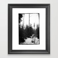 NORWEGIAN FOREST X Framed Art Print