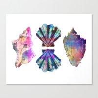 SEASHELL LOVE III Canvas Print