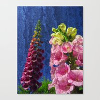 Two Foxglove Flowers On… Canvas Print