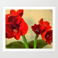 My Christmas flower Art Print