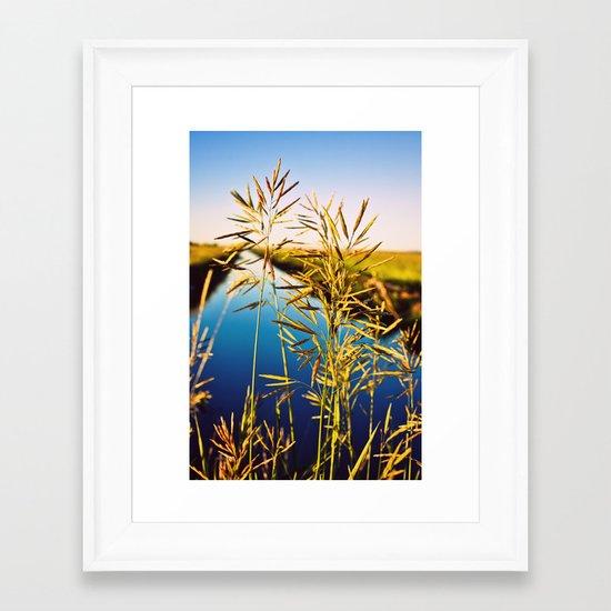 Wild Summer Grass Framed Art Print