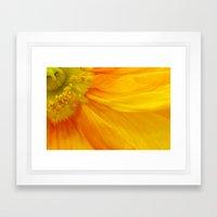 Orange Poppy II Framed Art Print